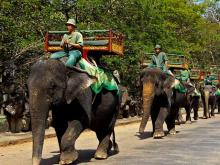 Angkor Wat Elephant Ride